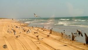 Playas en Doñana.